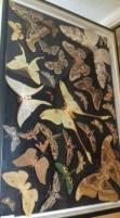 moths-1